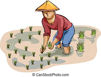 Cultivador de arroz