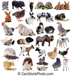 cultive animales