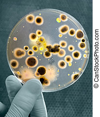 cultura, bacterias
