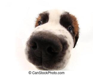 Curiosidad de un santo perro