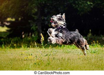 Curioso salto de perro