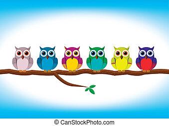 Curiosos búhos coloridos seguidos