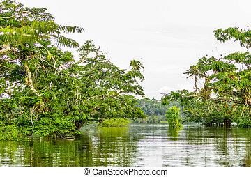 Cuyabeno ecuador River