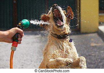Día caliente con perro