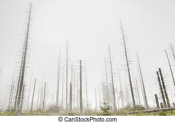 Día de niebla de otoño