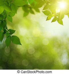 Día de verano hermoso en el bosque, antecedentes ambientales abstractos