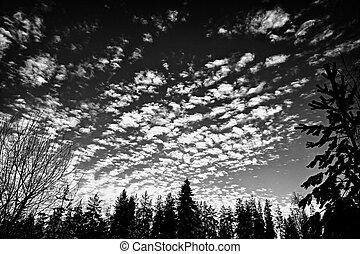 día, siluetas, invierno de árbol, velloso, encima, nubes