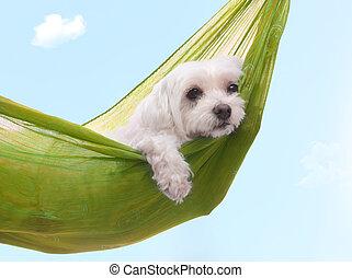 Días de perros perezosos del verano