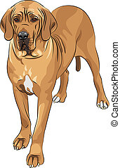 danés, grande, cervato, casta, vector, bosquejo, perro doméstico