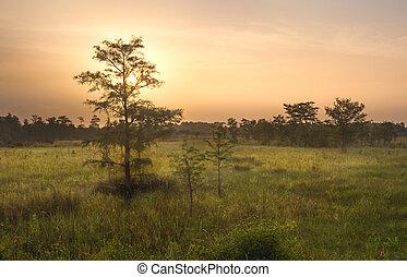 Dawn sobre Everglades pantano