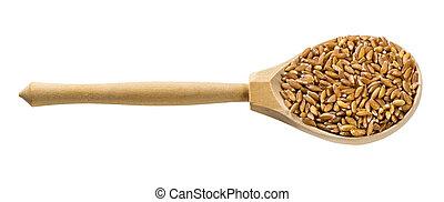 de madera, granos, aislado, farro, cuchara, emmer