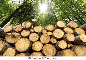 de madera, troncos, plano de fondo, bosque