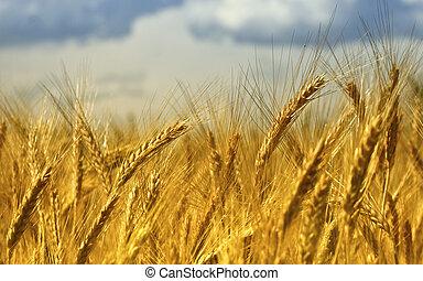 De trigo