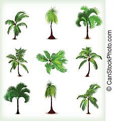 De varias palmeras. Ilustración del vector
