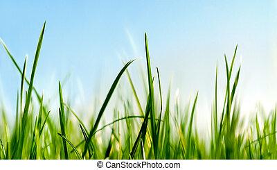 Debajo de la hierba