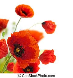 decoración, -, flores, amapolas, floral, esquina, frontera, diseño