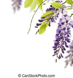 decorativo, glicina, ángulo, hojas, elemento, flores, fondo., verde blanco, frontera, encima, página