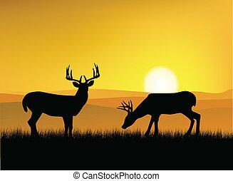 Deer silueta