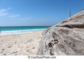 del, playa, en, caribe., tronco, una