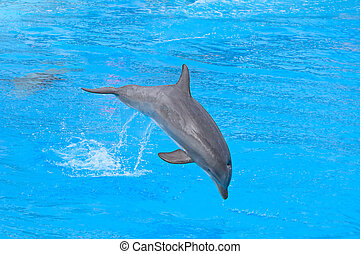 Delfines de botella