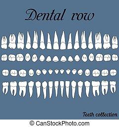 dental, dientes, fila