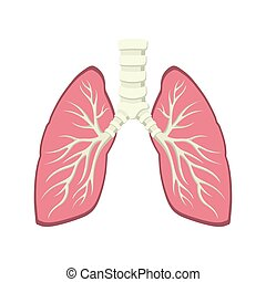Dentro de la anatomía pulmonar humana