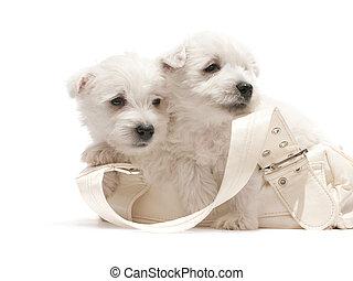 descansar, blanco, bolsa, dos, perritos