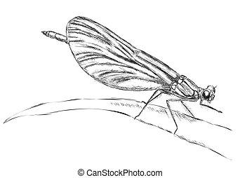 descansar, libélula
