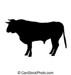 descansar, negro, toro