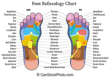 Descripción de la carta de reflexología del pie