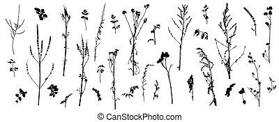 descubierto, plants., illustration., tallos, vector, salvaje, conjunto, (weeds), silueta, plantas