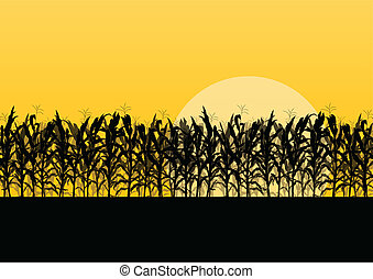 detallado, campo, maíz, ilustración, campo, vector, plano de fondo, paisaje