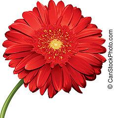 detallado, flor