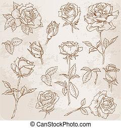 detallado, flor, mano, rosas, vector, dibujado, set:
