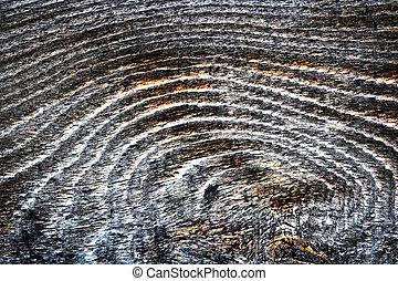 Detalle de madera de abeto