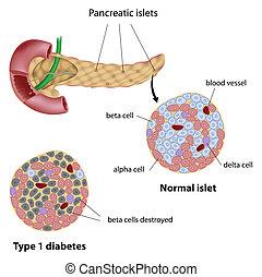 diabetes, pancreático, isleta, eps8