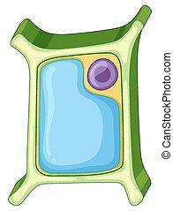 diagrama, célula, actuación, planta