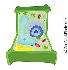 Diagrama celular de planta