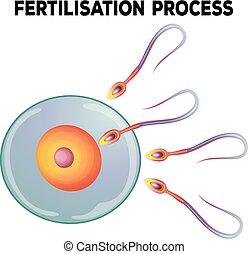 Diagrama de proceso de fertilización