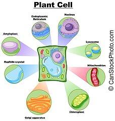 Diagrama que muestra célula vegetal