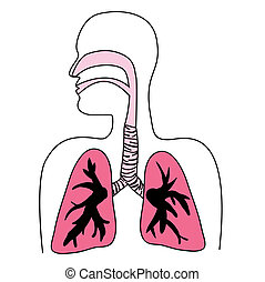 diagrama, sistema respiratorio, humano