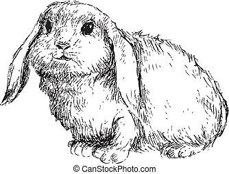 dibujado, conejo, mano