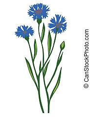 Dibujando la flor de la flor de la flor de la flor de fondo blanco