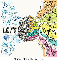 Dibujo de hemisferios cerebrales