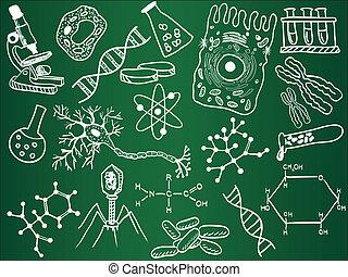 dibujos, biología, escuela, tabla