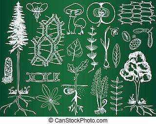 Dibujos de la planta de biología en el tablero de la escuela - ilustración botánica