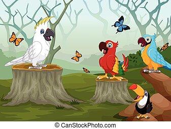 Dibujos de pájaros con bosques profundos