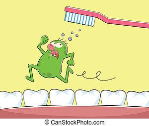 diente, germen