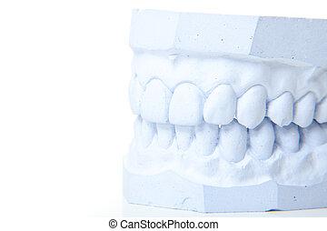 dientes, perfecto, molde, yeso