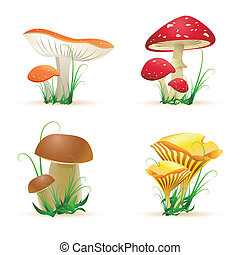 Diferentes hongos